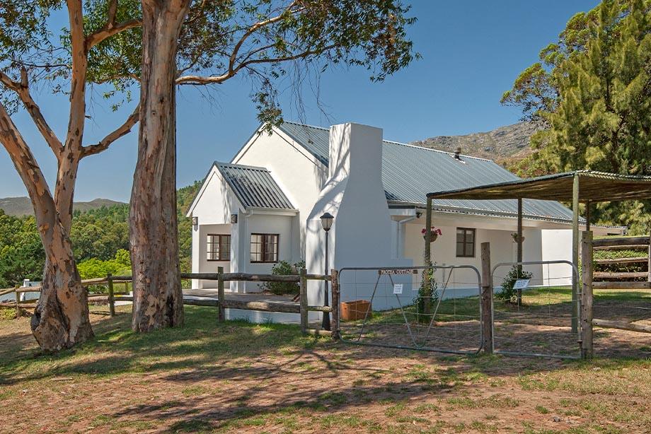 Protea & Agapanthus Cottage